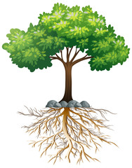 Big green tree with roots underground on white background