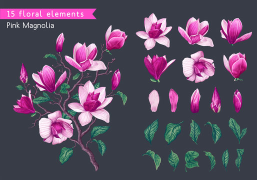 Set of realistic floral elements with pink magnolia flowers, branches and leaves. Hand drawn, vector botanical flora for decoration, wedding invitation, patterns, wallpapers, fabric, wrapping paper.