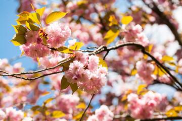Kolorowe odcienie wiosny lata kwiaty
