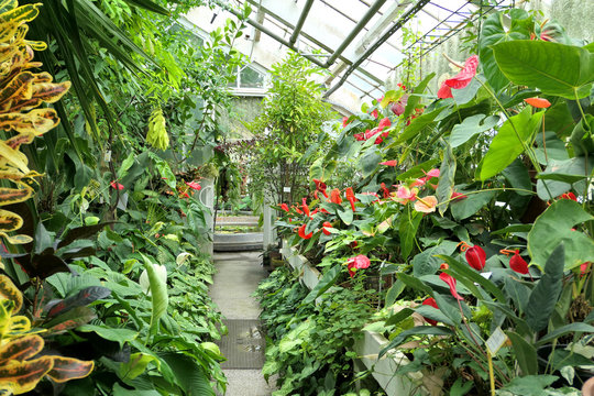 Plants in the greenhouse of botanical garden