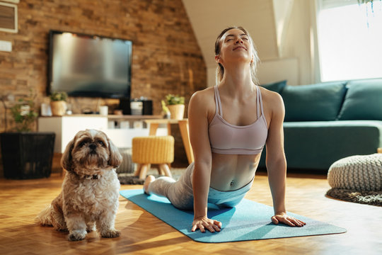 Relaxed woman with dog practicing Yoga in cobra pose at home.