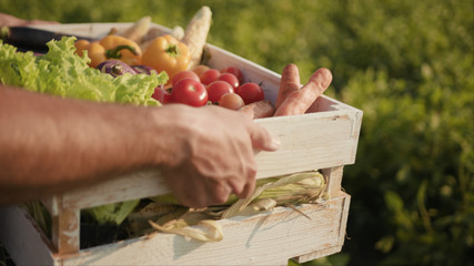 Hands young farmer is holding a box of organic vegetablesagriculture farm field harvest garden nutrition organic fresh portrait outdoor slow motion Fotomurales
