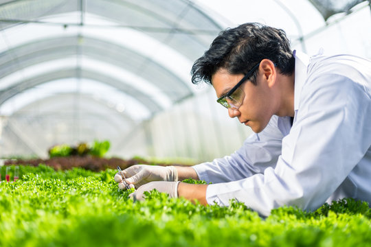 Scientists keep and test the solution, Chemical inspection, Check freshness  at organic, hydroponic farm.