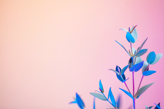 Creative neon background with foliages. Colorful abstract backdrop with vibrant gradients on petals. Exotic floral branch with pink and blue neon colors. Organic twigs with beautiful illumination