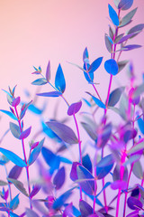 Poster Bloemen Light neon vertical background with leaves. Colorful botanical backdrop with vibrant gradients on petals. Nature branch with pink and blue vivid colors. Organic twigs with beautiful illumination