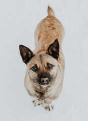 Portrait of a dog on a white background