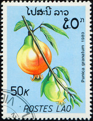 Printed roller blinds Chicken LAOS - CIRCA 1989: stamp 50 Laotian kip printed by Lao People's Democratic Republic, shows fruiting plant Punica granatum, flora, circa 1989