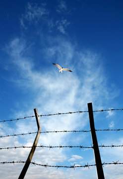 close up barbed wire fence and flying bird over sunny blue sky