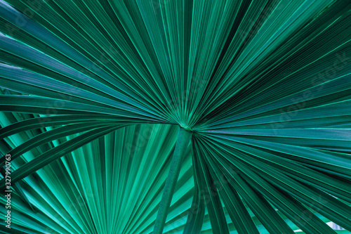 Wall mural tropical palm leaf and shadow, abstract natural green background, dark tone textures