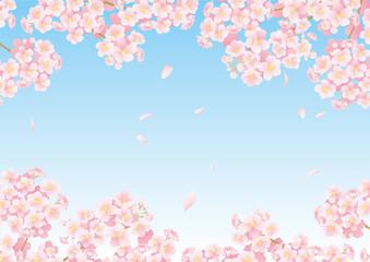 桜フレーム05