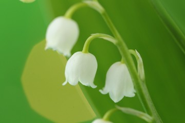 Photo sur Aluminium Muguet de mai Lily of the valley may flower on a green blurry background .Spring flowers. copy space. Spring floral gentle background.Flower card