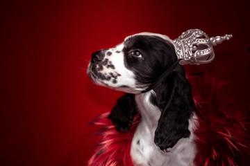 Wall Mural - Springer Spaniel puppy. 3 months. Home comfort . dog