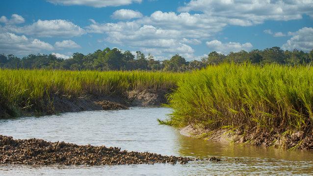 An oyster bed on a channel near a salt water wetland marsh