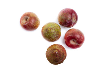 Watermelon Plum