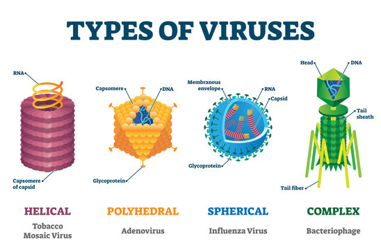 Types of viruses vector illustration labeled drawings