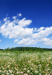Wall Mural - Idyllic view, green and flowery meadow