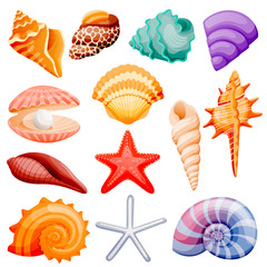 Seashells collection. Vector flat cartoon illustration. Summer travel design elements, isolated on white background