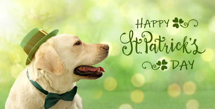 Labrador retriever with leprechaun hat and bow tie on green background, closeup. St. Patrick's day