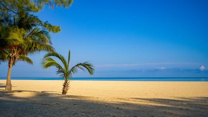 Karibischer Strand mit zwei Palmen