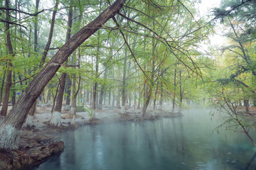Spoed Foto op Canvas Olijf Hot Spring, Blurred photo of morning fog over a lake in cold autumn weather in half moon san luis potosi