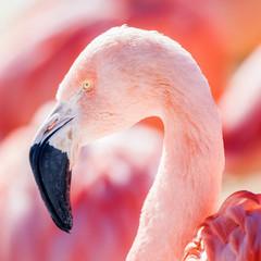 Foto op Canvas Flamingo closeup of pink flamingo