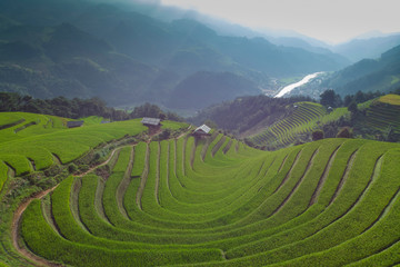 Tuinposter Rijstvelden Aerial view of Paddy filed at Mu Cang Chai in Vietnam during harvest season.