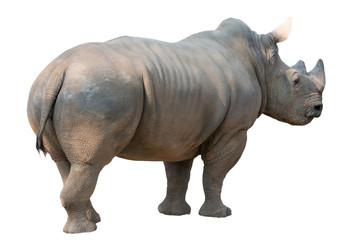 Foto op Aluminium Neushoorn white rhinoceros isolated