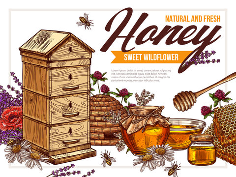 Vector hand drawn honey colorful design of poster. Sketch illustration with wildflowers, hives, honeycombs, jars, pots on background. Template for beekiping business