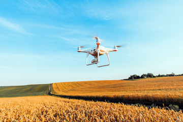 Wall Mural - drone quad copter on green corn field