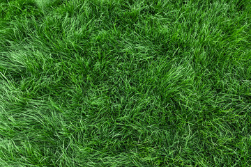 Foto op Plexiglas Gras Natural green grass background, fresh lawn top view