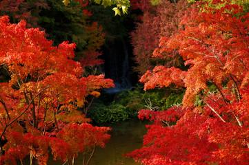 Foto auf Leinwand Rot kubanischen Photo material: waterfall and autumn leaves