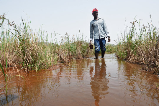Former mine worker Abdulai Bangura wades through swamp water en route to a community garden outside iron ore mine in Marampa
