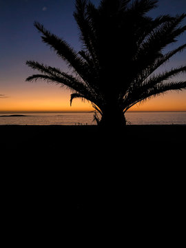 Palme Silhouette vor Sonnenintergang; Südafrika