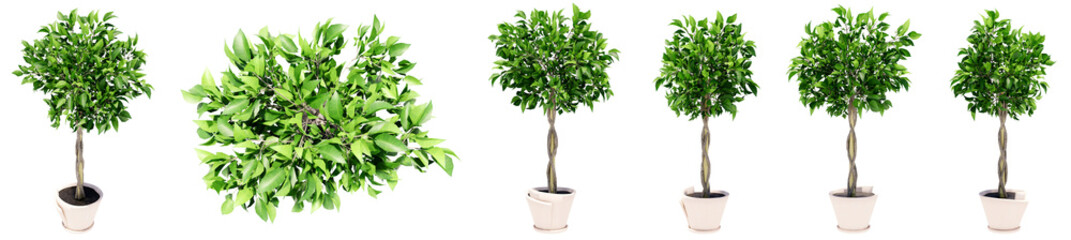 Set or collection of beautiful green interior plants isolated on white background. Concept or conceptual 3d illustration for nature and ecology, beauty and gardening, spring or summer Fototapete