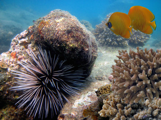 Fototapete - Wonderful and beautiful underwater world with corals and tropical fish.Red Sea. Sharm