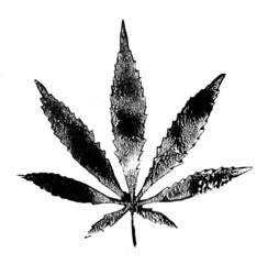 Canvas Prints Butterflies in Grunge Grunge Marijuana Leaf