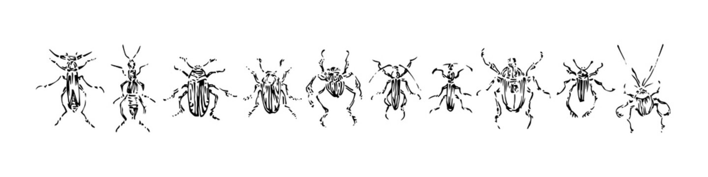 Hand drawn monochrome beetles set. Sketch style vector illustration. Black isolated bugs insect, design elements on white background