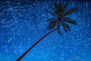 Wall Mural - Coconut palm trees with star rail on night sky.