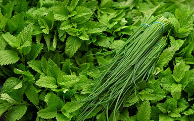 Fototapeta Bunch of chives over bright green mint leaves displayed on herbs market obraz