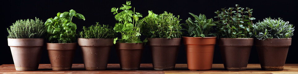 Homegrown and aromatic herbs in old clay pots. Set of culinary herbs. Green growing sage, oregano, thyme, savory, mint and oregano with lavender