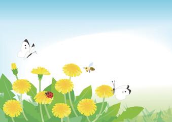 Fototapeta タンポポと春の昆虫 obraz