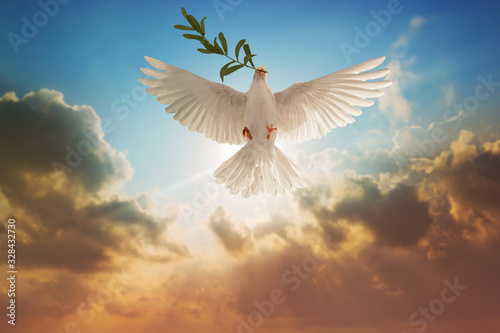 Canvas Prints White Dove carrying olive leaf branch on Beautiful light and lens flare .Freedom concept and international day of peace