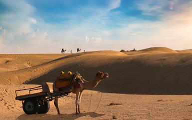 Poster Kameel Camel cart at the Thar Desert Jaisalmer with tourist enjoying camel safari at sunset