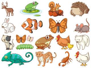 Zelfklevend Fotobehang Kids Large set of wildlife with many types of animals