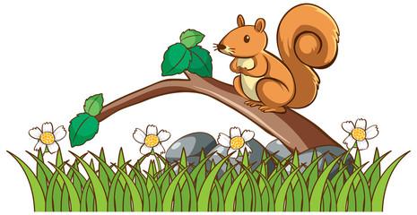 Zelfklevend Fotobehang Kids Isolated picture of squirrel in garden