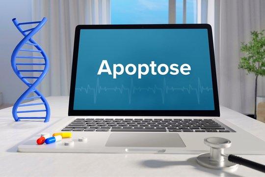 Apoptose – Medizin, Gesundheit. Computer im Büro mit Begriff auf dem Bildschirm. Arzt, Krankheit, Gesundheitswesen