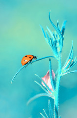 Keuken foto achterwand Vlinder Beautiful ladybug on leaf defocused background