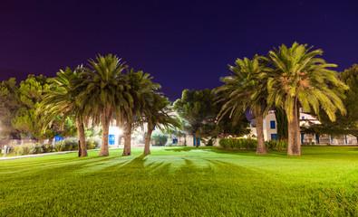 壁紙(ウォールミューラル) - Evening view of the square with palm trees.