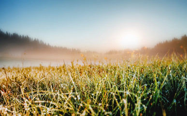 壁紙(ウォールミューラル) - Fantastic meadow in the morning light. Locations place Durmitor National park, Montenegro.