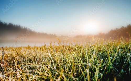 Wall mural Fantastic meadow in the morning light. Locations place Durmitor National park, Montenegro.